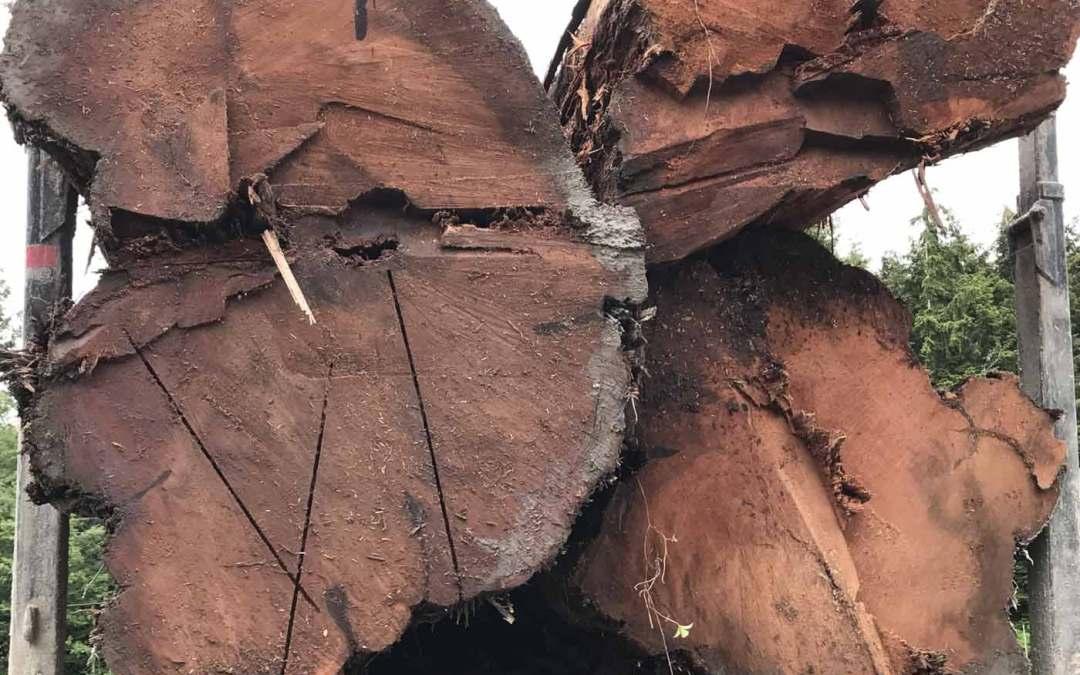 Log Wrangling in Beaver Cove BC