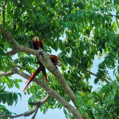 Costa-Rica Aras