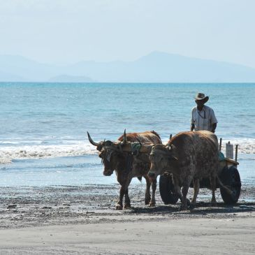 J186 à 193 : La côte pacifique d'Herradura à Ventanas