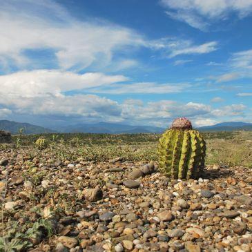 J245 à 248 Desierto de la Tatacoa et Tierradentro