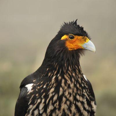 Oiseau_Laguna_Verde