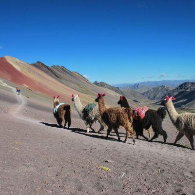 Cerro_Colorado_Lamas
