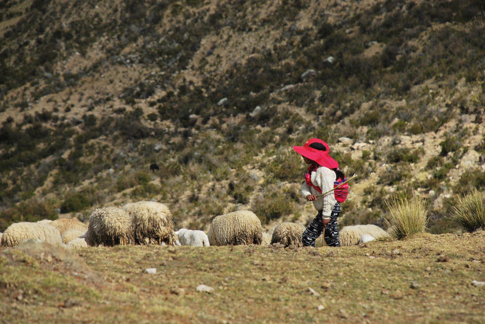 Bolivie_Isla Del Sol_bergere