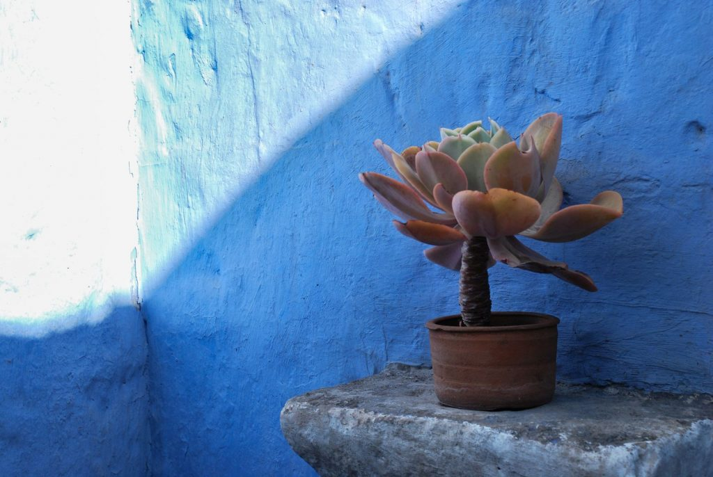 Plante_Bleu