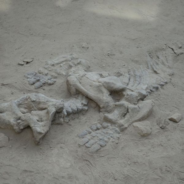 Nord_Argentine_dinosaures