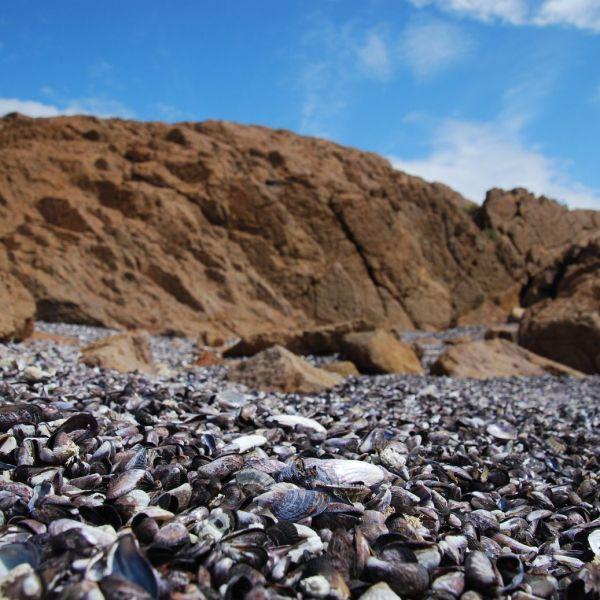 Chubut_Seaside