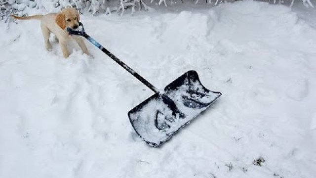 Columbus Ohio Home Inspectors Dog Shovels Snow