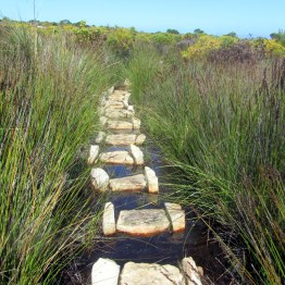 Well constructed and maintained trail, Cape Point Nature Reserve