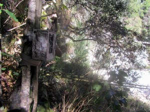 Homtini River camera trap