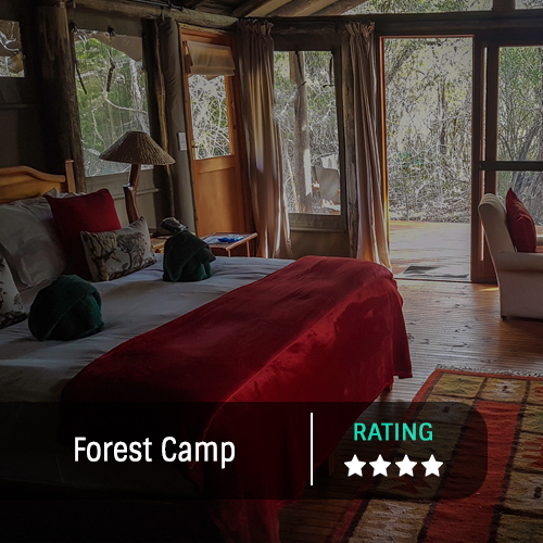 Forest Camp Feature Image2