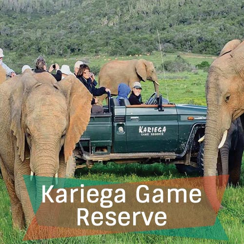 Kariega Game Reserve Featured Image 500x500