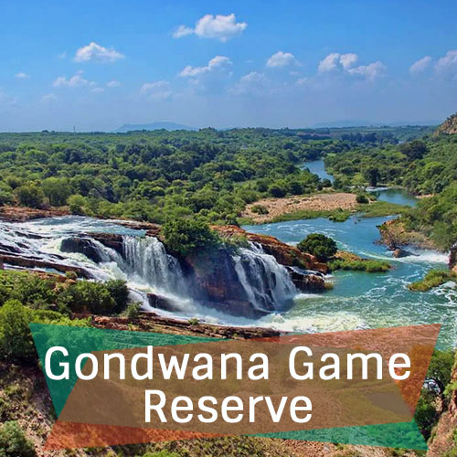 Gondwana Game Reserve Feature Image