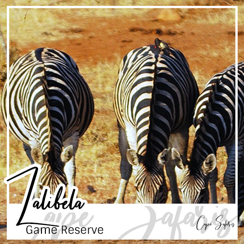 Lalibela Game Reserve Fetured Image 2019