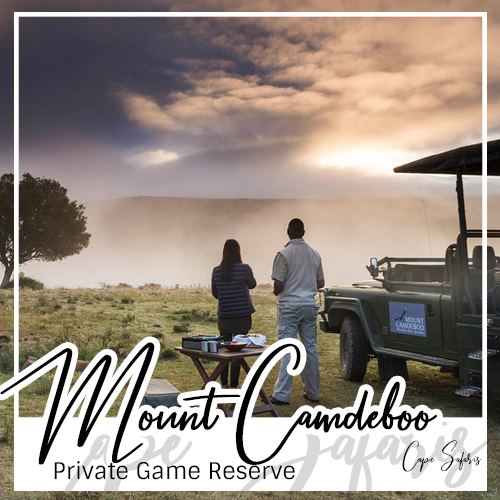 Mount Camdeboo Private Game Reserve Fetured Image 2019