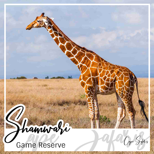 Shamwari Game Reserve Fetured Image 2019