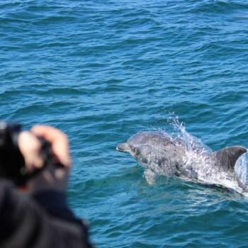 Grootbos Villa Dolphin