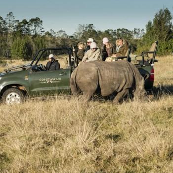 Kwena Lodge Rhino