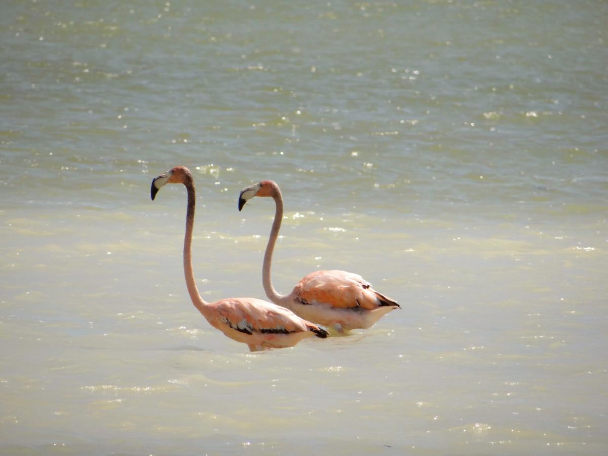 Jaragua National Park flamingo // Dominican Republic
