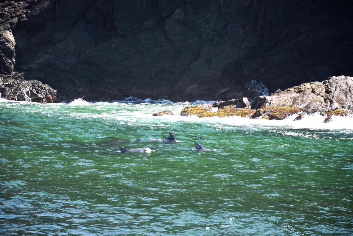 Port Stephens dolphins // Australia