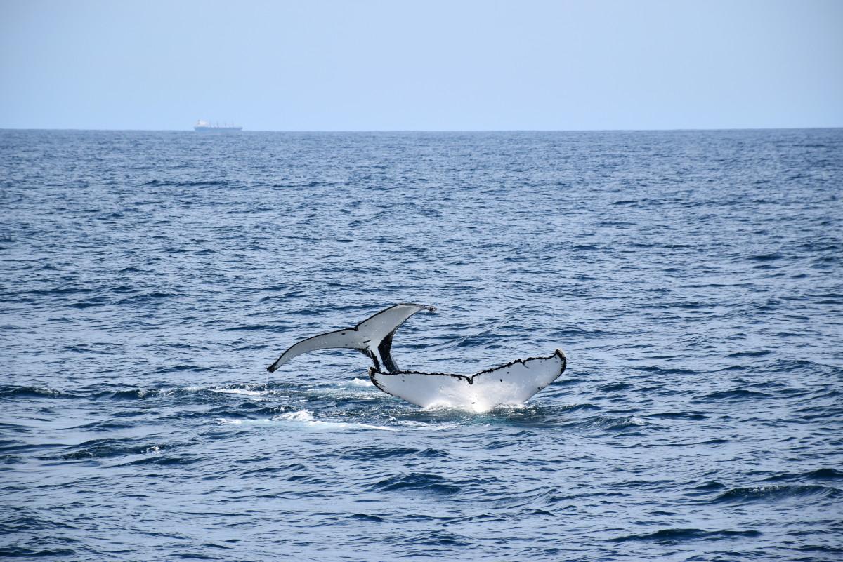 Port Stephens Port Stephens whale watching // Australia
