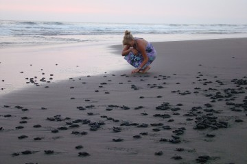 Mexico sea turtles