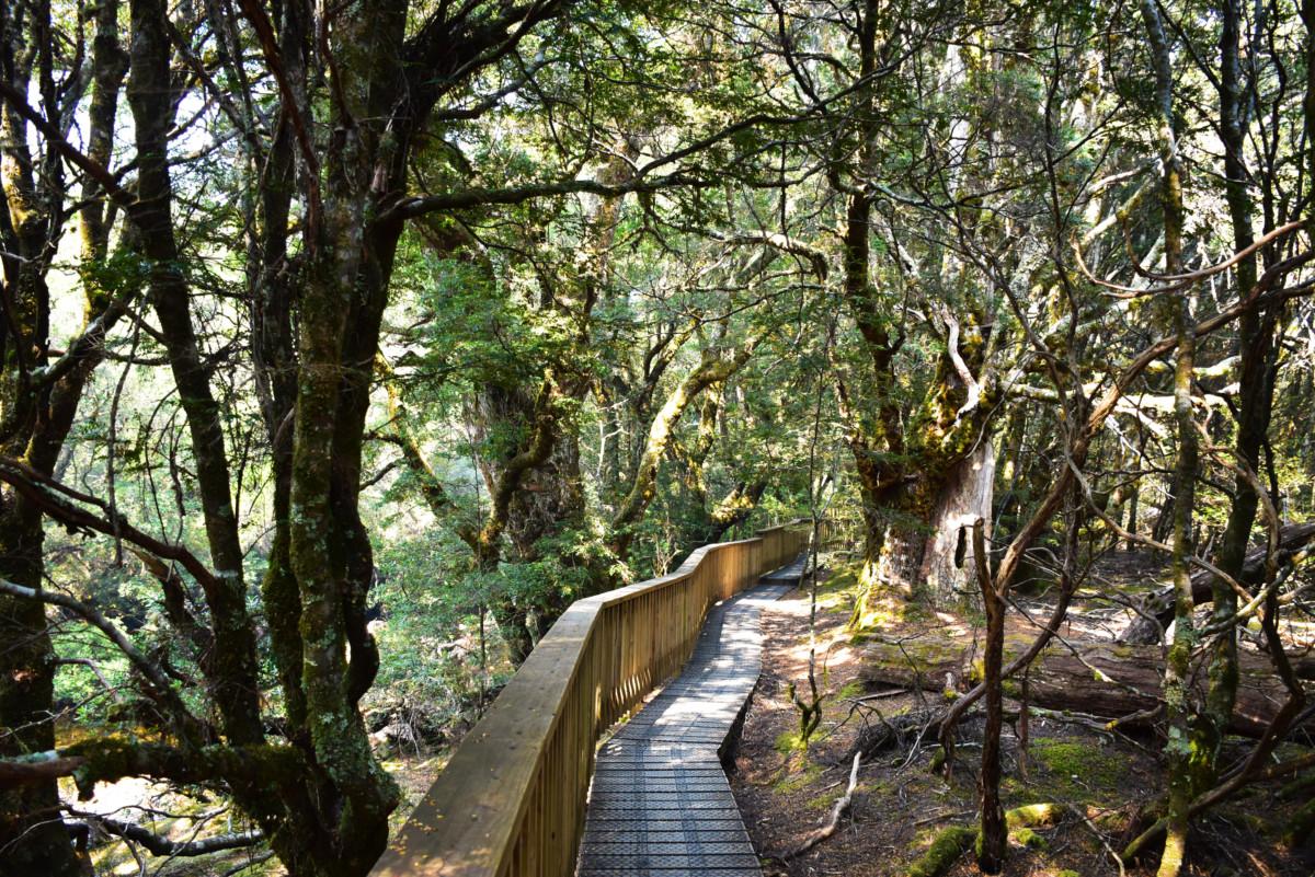 Australia Tasmania Cradle Mountain Enchanted Walk