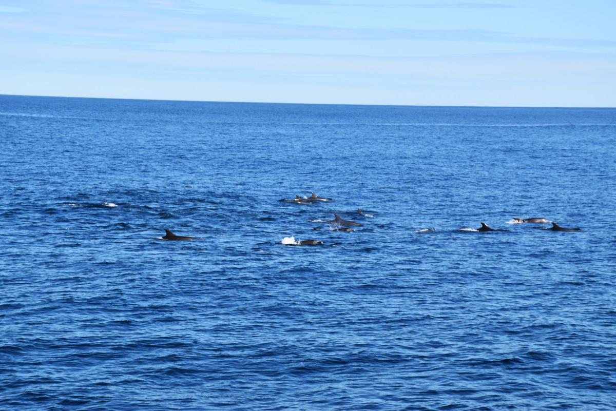 Australia Whale Shark Tour Observer