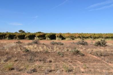 Vineyards Mildura Victoria Australia