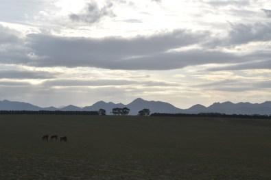 Farmland Victoria Australia