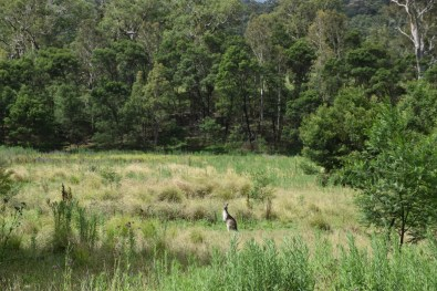 Kangaroo Valley Wildlife New South Wales Australia
