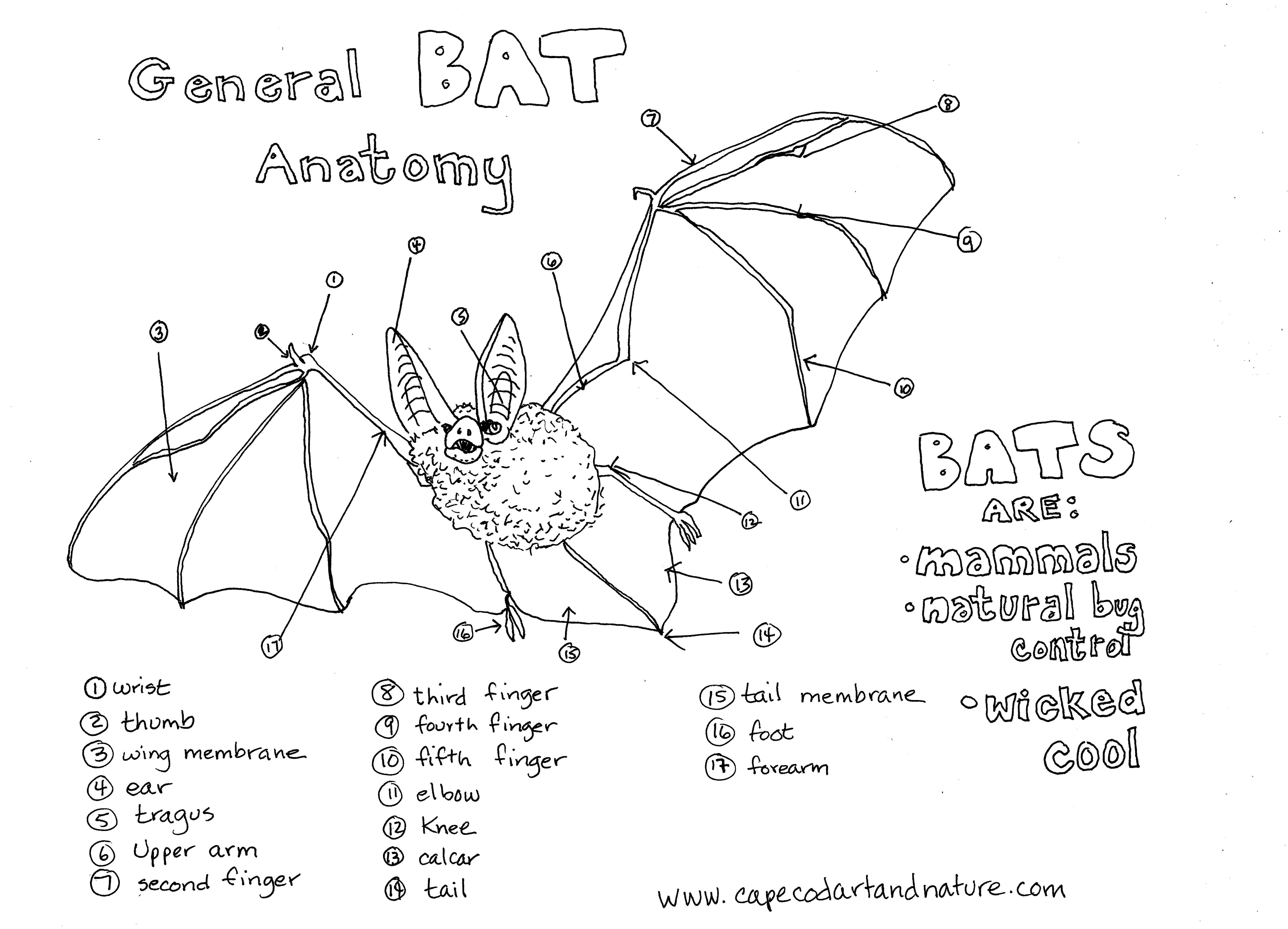 Celebrating Bats On Halloween