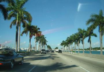 Miami Beach Straße mit Palmen Ausflug von Cape Coral
