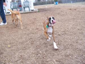 Cape May dog park