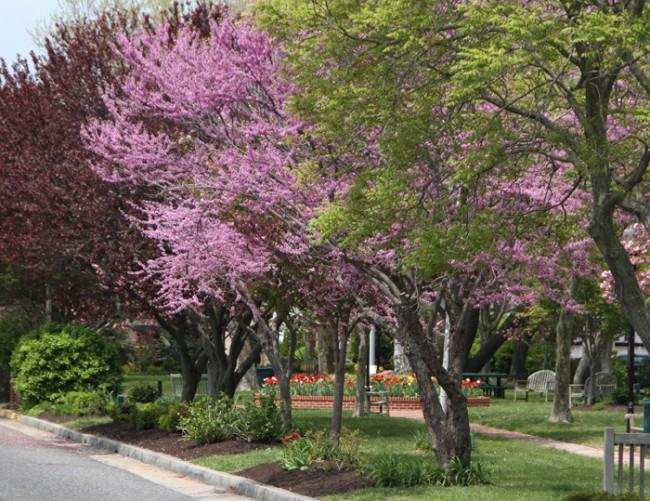 Wilbraham Park