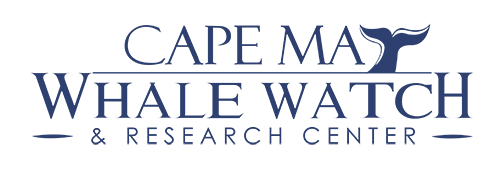 Cape May Whale Watch