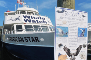 Cape May Whale Watch featured image