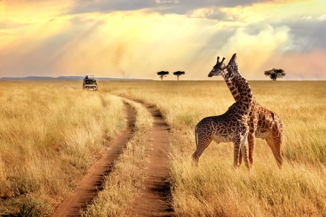 Self drive safari in South Africa by Star Car Rental car hire in Cape Town
