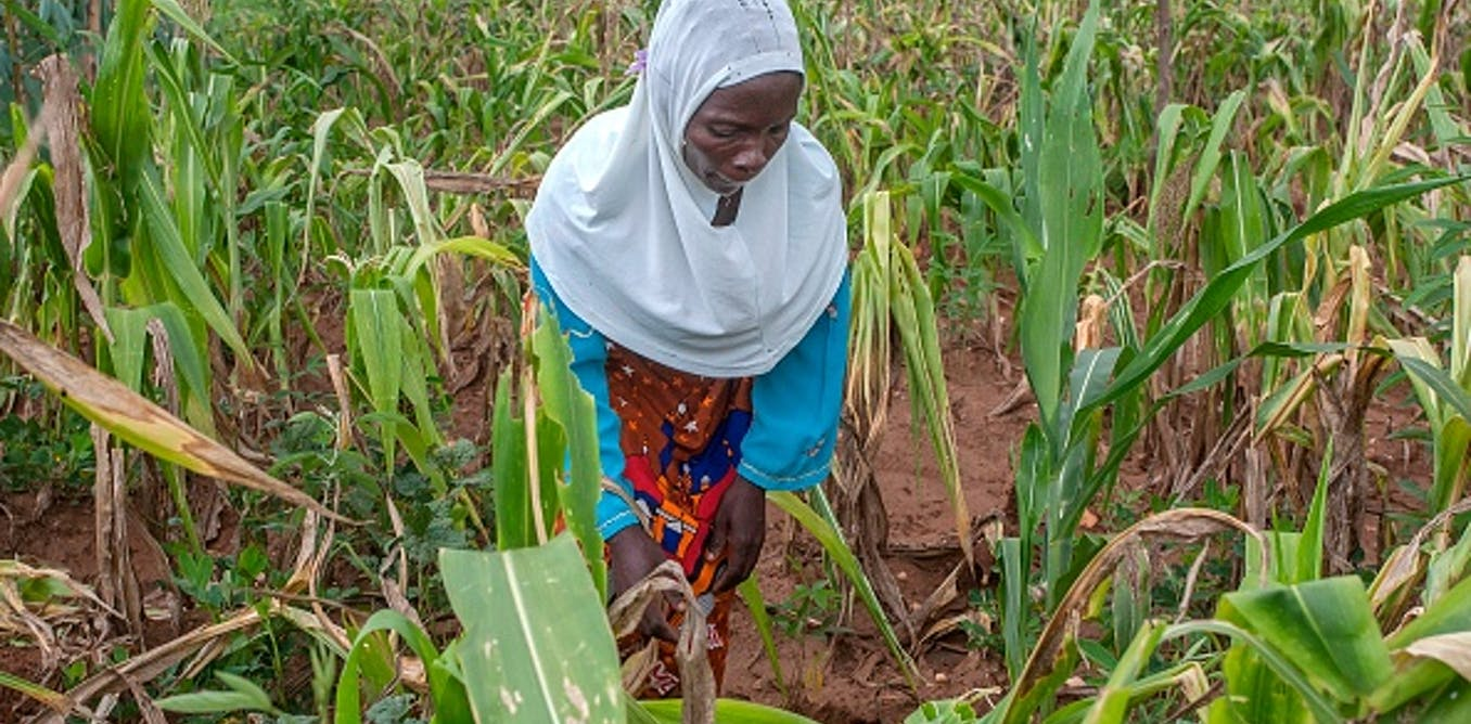 Malawi's farm subsidies aren't helping women: but there are solutions