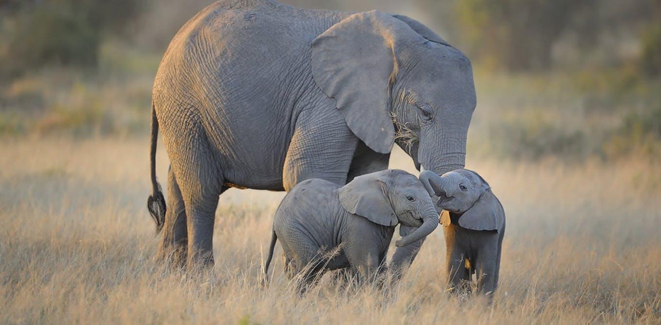 motherhood across the animal kingdom