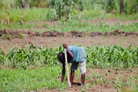 En rachetant 21 % de LendXS, IDH Farmfit Fund espère faciliter l'accès aux crédits pour des agriculteurs africains
