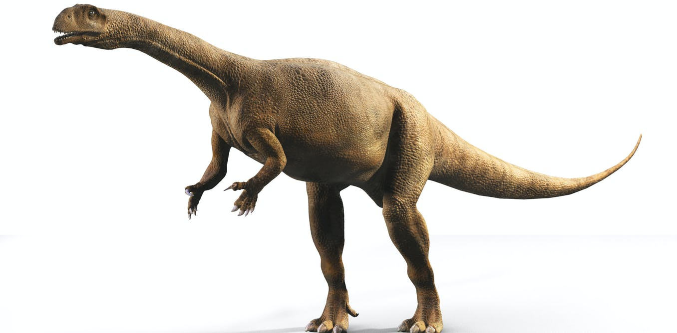 South African dinosaur skeleton scans build up a picture from egg to adult