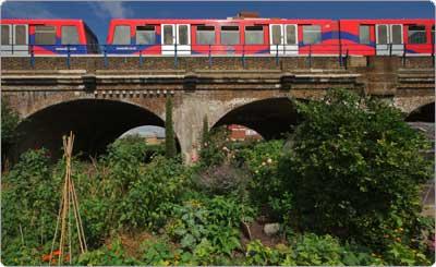 agricultura urbana comunitária em área pública de Londres