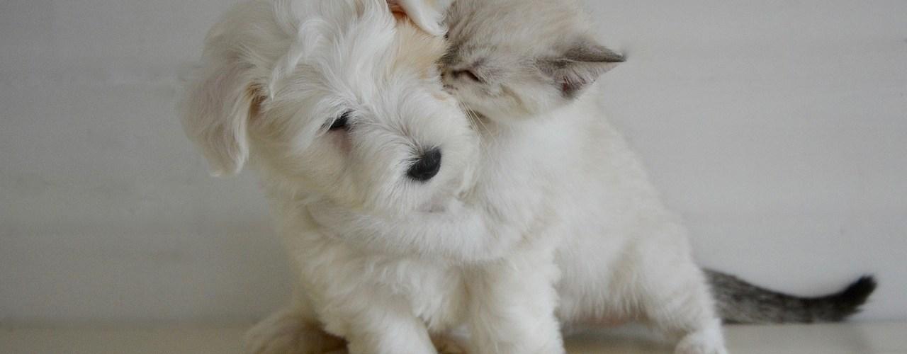 assurance chiots et chatons