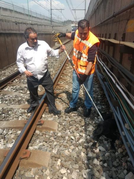 Rescate Perro en Metro