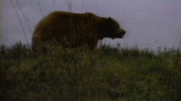 """""""There's a bear out there"""" ad for Ronald Reagan"""
