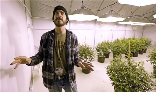 Company partner Fitz Couhig stands in a growing room at the Pioneer Nuggets marijuana growing facility in Arlington, Wash.  (AP Photo/Elaine Thompson)