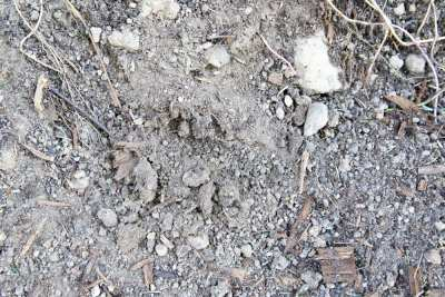 Glacial Till. This is mostly what the ground beneath our streets looks like. (Image: Brendan McGarry)