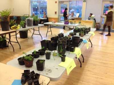 plant exchange 2013