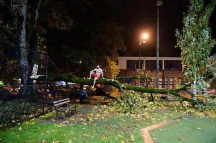 """""""Wind storm knocks over tree on Capitol Hill Cal Anderson Park, Man stripped bare and climbs."""" (Image: @timdurkan via Twitter)"""