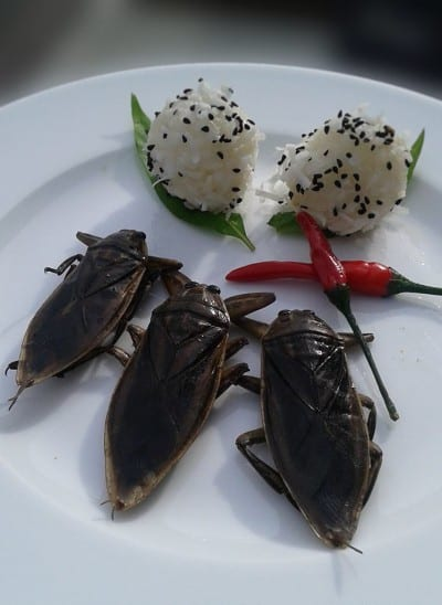 """""""This week's Special, Mang Da Na (Giant Thai Water Beetle). Their flavor is heavily floral with a hint of salt and spice and are eaten as a snack throughout many parts of SE Asia. The extracted essence is also used as a flavoring for several traditional dishes but due to its scarcity, an artificial version is often used. As these are the real Mccoy, we are serving them traditionally plain with a side of pickled Thai chili and a sticky rice ball accompaniment. Supply is limited so get 'em while you can!"""""""